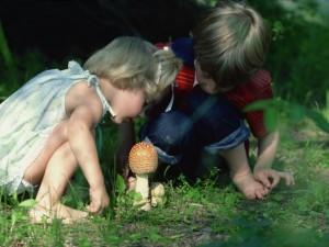 Zrezygnuj z grzybów