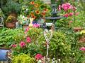 Kwiaty na rabatki
