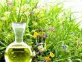 Zioła dla urody - działanie i zastosowanie ziół w pielęgnacji urody