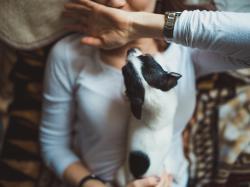 10 ras psów, które nadają się do mieszkania w bloku