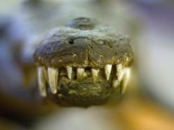 Aligatory przyszłością stomatologii?