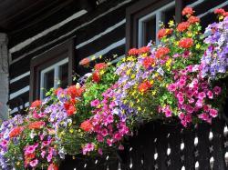 Balkonowe twardzielki - 5 niezawodnych kwiatów na balkon