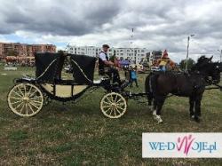 Bryczka na ślub - Gliwice-Pyskowice - Alfons Koss