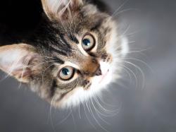 Cała nasza rodzina -  dwójka alergików, dziecko i kot