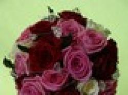 Czerwone korale kwiaciarnia