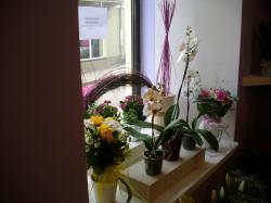 Kwiaciarnia Lawendowa