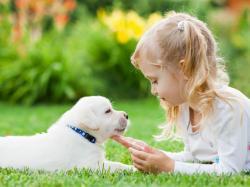 Nie wiesz, na jakiego psa się zdecydować? Skorzystaj z naszej listy!