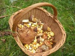 Ochrona grzybów w Europie
