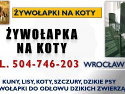 Odławianie dzikich kotów, tel. 504-746-203, Wrocław. Żywołapka na koty, cena. Jak złapać dzikiego kota? Jak jest skuteczna metoda na jego złapanie. Żywołapki to specjalny rodzaj pułapki nie tylko na kota, ale także na kuny, lisy.