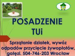 Posadzenie tui, tuje, sadzenie, tel 504-746-203, roślin,  tuji, cena