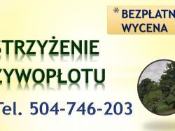Przycięcie drzew, gałęzi, tel 504-746-203, podcięcie drzewa, Wrocław, cennik