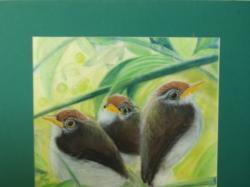 """""""Ptaki""""-obraz, sucha pastel w passe-partout. Ozdoba każdego pokoju."""