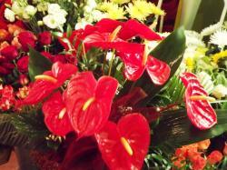 Studio Florystyczne Kwiaciarnia Lubin Orla