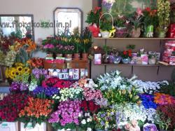Image result for poczta kwiatowa koszalin