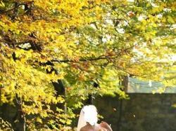 Suknia ślubna 2w1 z kolekcji Gala + koronkowe bolerko - stan idealny!
