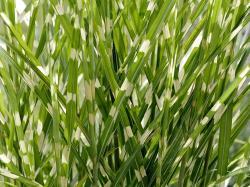 Szumi trawa w ogrodzie