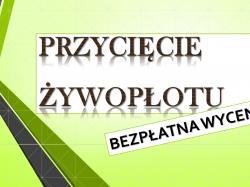 Usługi ogrodnicze Wrocław, tel 504-746-203.  Fachowa Wycinka Drzew Wrocław i okolice. Usługi , Koszenie traw, ciecie drzew,