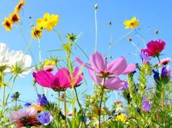 Wybierz razem z nami letnie kwiaty do ogrodu