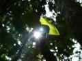 dżungla amazońska