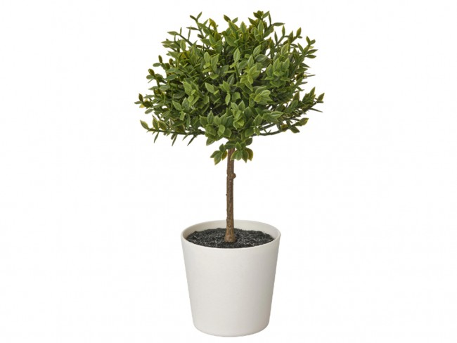 roślina ikea