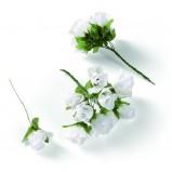 białe kwiaty KiK