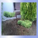 Wymarzony Ogród-projektowanie ogrodów,pełna realizacja