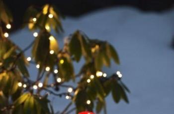 Bożonarodzeniowe oświetlenie marki JULA