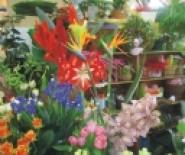art dekor poczta kwiatowa wyślij kwiaty na ślub