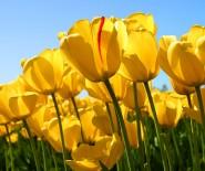 """kwiaciarnia """"Glorioza"""""""