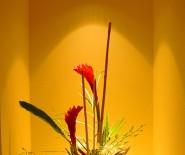 Kwiaciarnia Mandragora