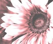 """Kwiaciarnia """"MARANTA"""""""