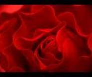 Kwiaciarnia Rose