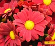 Kwiaciarnia Zapała Mrągowo