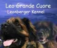 Leo Grande Cuore