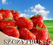Truskawki sadzonki owoce Małopolska Śląsk Podkarpacie
