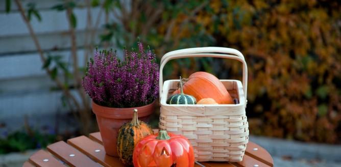 Prace ogrodowe na jesień