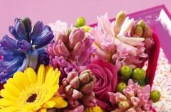 Hiacynty pachną wiosną