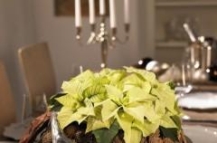 Kwiatowe aranżacje na Boże Narodzenie