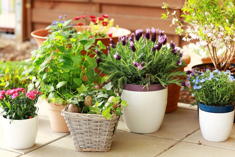 Wybieramy Oryginalne Rośliny Na Balkon Ogród I Balkon