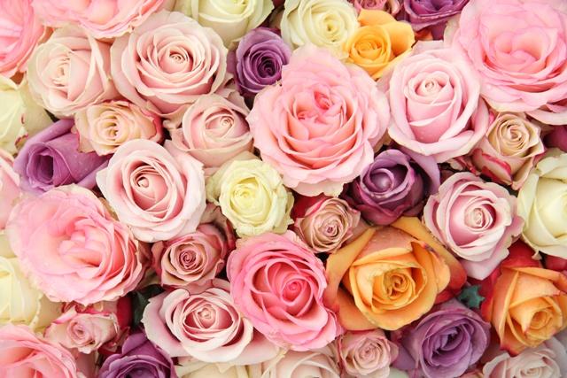 róże na ślub