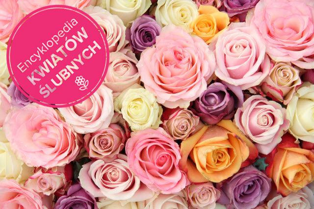 Róże Na ślub Organizacja I Formalności Polkipl