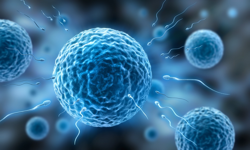 komórka jajowa