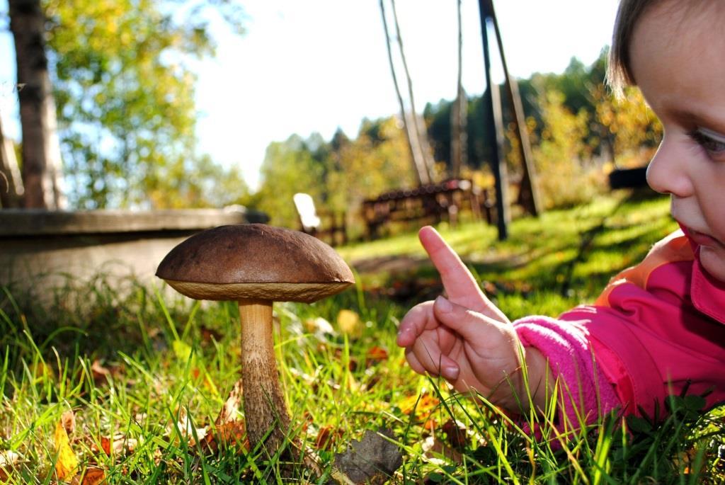 zatrucie grzybami u dziecka