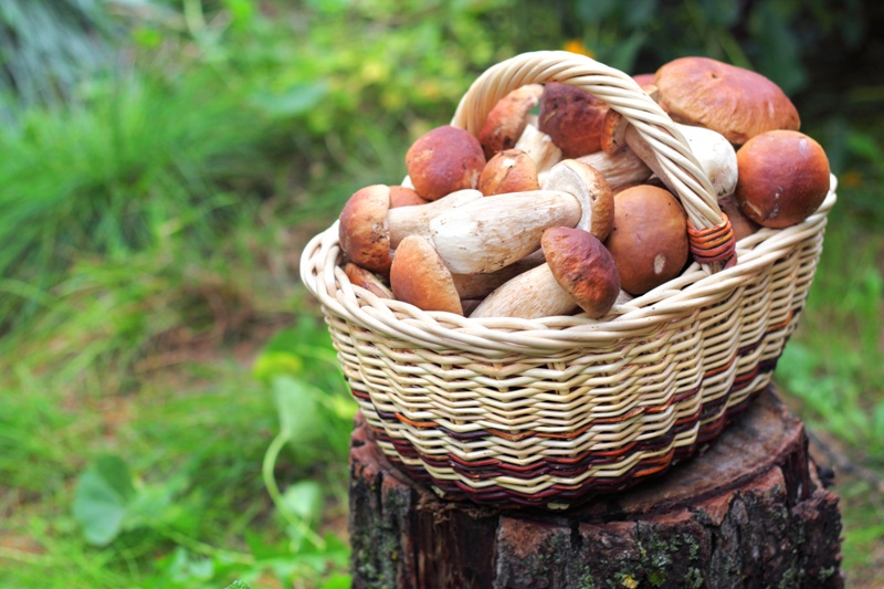 skup grzybów