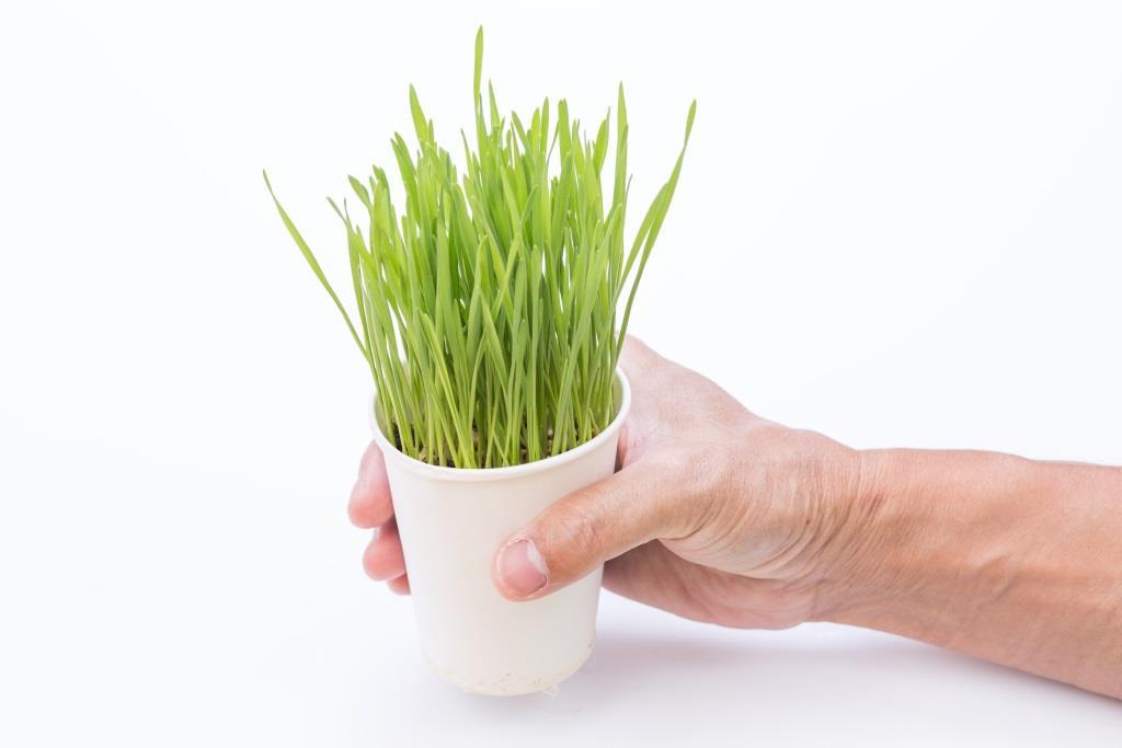 zielony jeczmien na co dziala