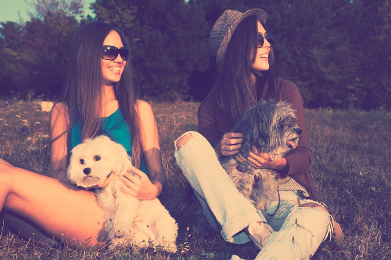 pies a zawieranie przyjaźni
