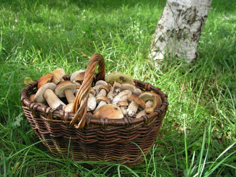 Występowanie grzybów w Polsce