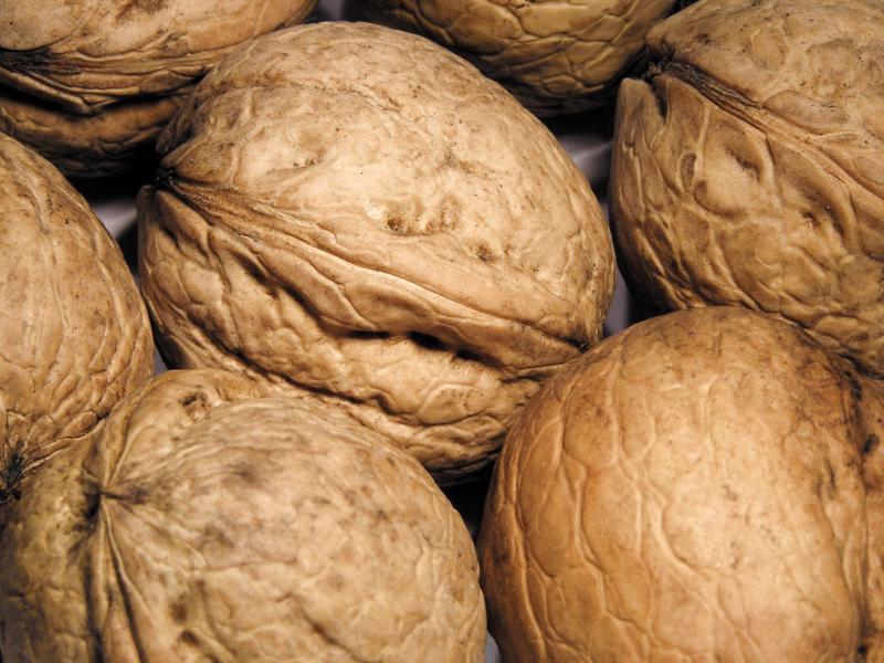Orzechy włoskie – ważny składnik diety