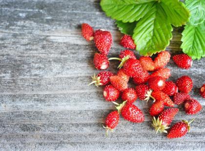 Jak uprawiać truskawki, poziomki, jeżyny i maliny?