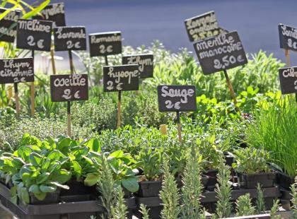 Jak uprawiać zioła na balkonie i w ogrodzie?